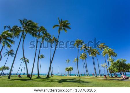 Coconut palm tree at Waikiki beach Honolulu Hawaii - stock photo