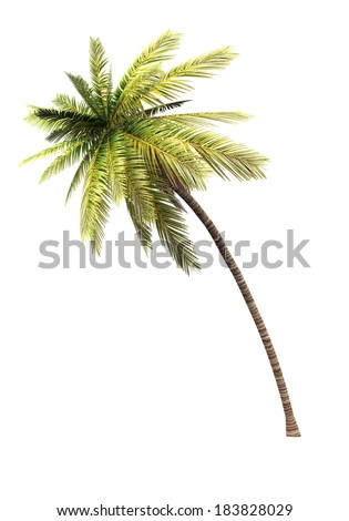 coconut palm tree isolated - stock photo