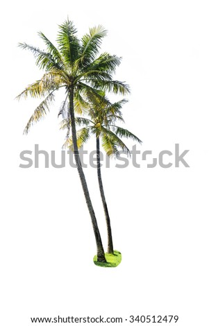 coconut palm tree isolated on white.  - stock photo