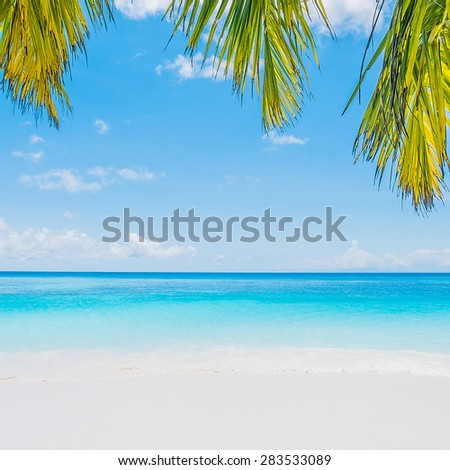 Coconut palm tree leaf with beautiful tropical beach and sea on blue sky background