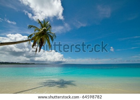 Coconut palm tree on perfect tropical beach - stock photo