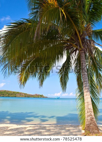 Coconut palm tree on the beach near blue sea water - stock photo
