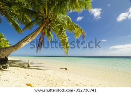 coconut palm tree on the beach near crystal blue ocean at samoa - stock photo