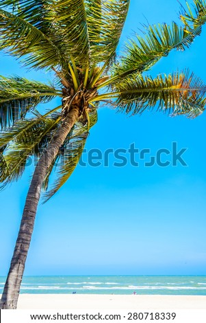 Coconut palm tree on tropical beach