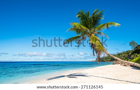 Coconut palm tree on tropical beach, Seychelles - stock photo