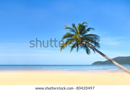 Coconut palm tree on white sand beach - stock photo