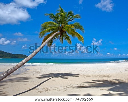 Coconut palm tree on white sand beach. Summer vacations scene.