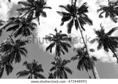 coconut palm tree plantation - black and white