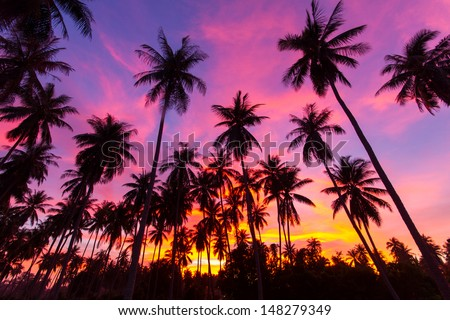coconut palm tree silhouette at Koh Samui, Thailand - stock photo