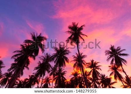 coconut palm tree silhouette at Koh Samui, Thailand - stock photo