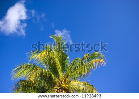 Coconut Palm Tree Top and Bright Blue Sky - stock photo