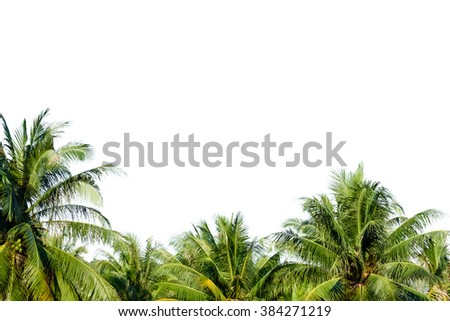 Coconut palm trees against on white background - stock photo