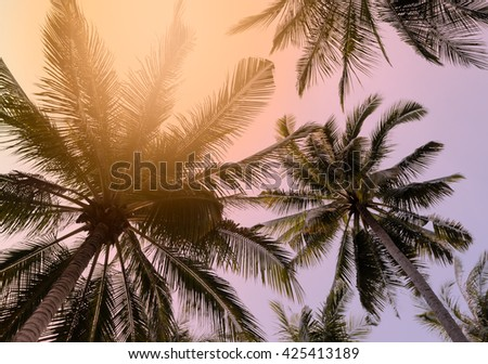 Coconut palm trees against the sky, color filter effect - stock photo