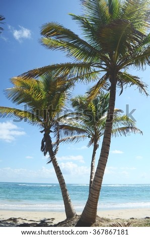 coconut palm trees and beach
