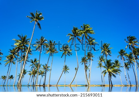 Coconut palm trees and blue sky - stock photo