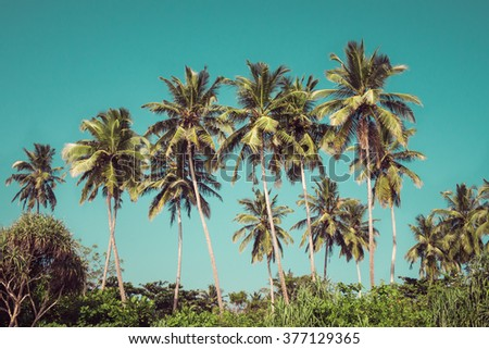Coconut palm trees and mangrove in tropics as a background. Toned effect - stock photo