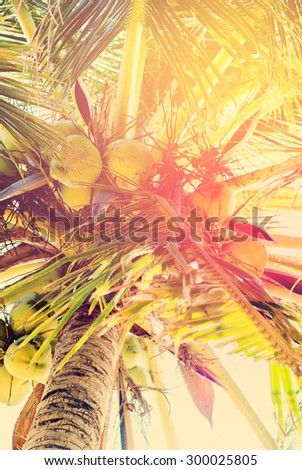 Coconut Palm Trees, as Background with solar effect - stock photo