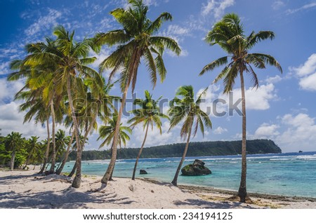 coconut palm trees at a white beach - stock photo