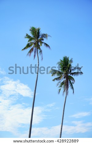 coconut palm trees at beautiful blue sky. - stock photo