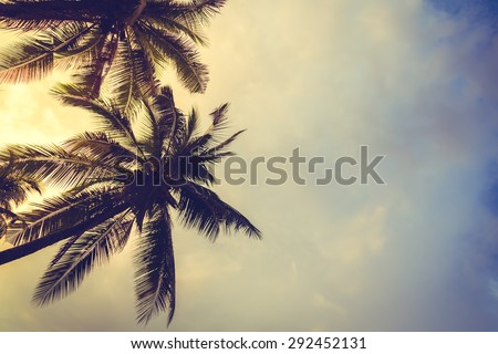 Coconut palm trees  ( Filtered image processed vintage effect. ) - stock photo