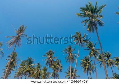 Coconut palm trees gainst blue sky - stock photo