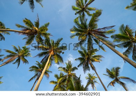 Coconut palm trees in perspective view from below - stock photo