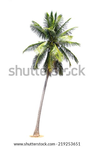 coconut palm trees isolated on white background. - stock photo