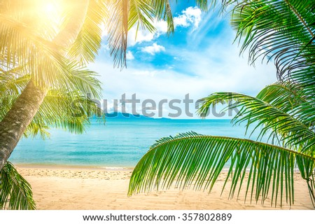 Coconut palm trees on the sunny beach - stock photo