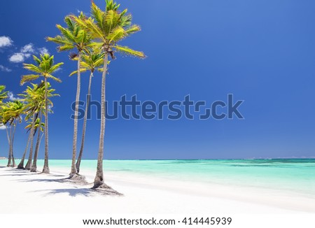 Coconut Palm trees on white sandy beach in Cap Cana, Dominican Republic - stock photo