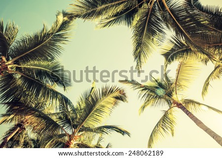 Coconut palm trees over bright sky background. Vintage style. Toned photo with instagram filter - stock photo