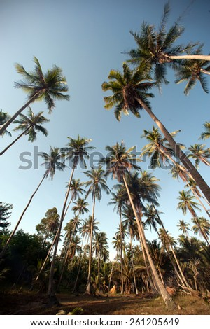 Coconut palm trees perspective view. - stock photo