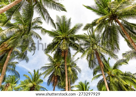 Coconut palm trees perspective view - stock photo