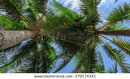 Coconut palm trees perspective view from below.