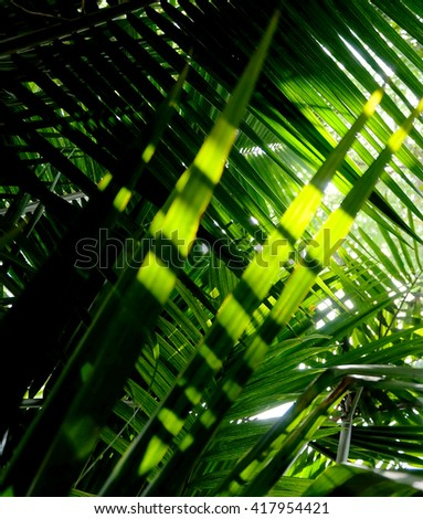 Coconut palm trees perspective view ,Green abstract blur nature background - stock photo