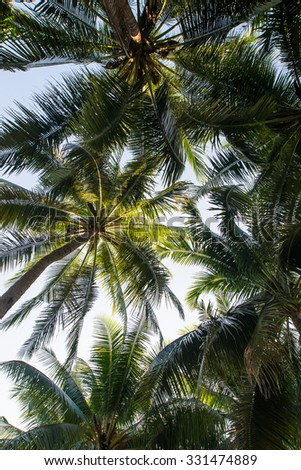 Coconut palm trees perspective view, Landscape in island