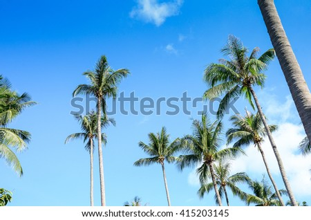 Coconut palm trees perspective view.palm beach.Palm trees against blue sky.Tropical Beach and coconut leaf of Tree.