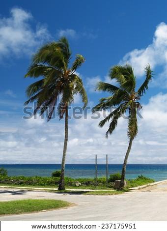 Coconut palm trees, Tonga - stock photo