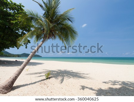 Coconut palm with white sand and blue sky. - stock photo