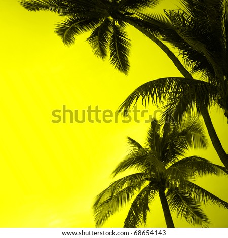 Coconut palms - stock photo