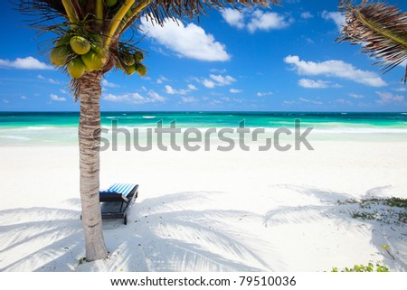 Coconut palms at perfect Caribbean beach in Tulum Mexico - stock photo