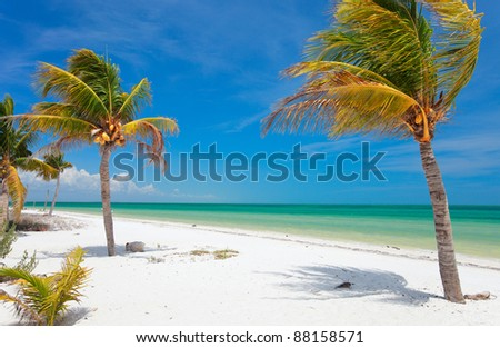 Coconut palms at tropical beach on Holbox island in Mexico