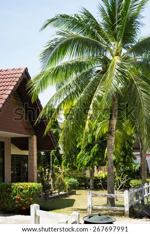 Coconut palms in the Thai village, Phuket - stock photo