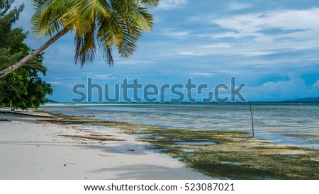 Coconut Palms near Diving Station on Kri Island, Raja Ampat, Indonesia, West Papua