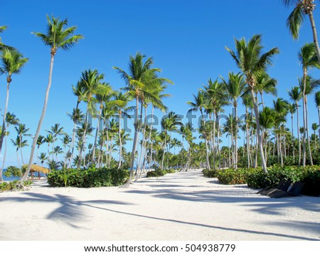 Coconut palms on sand beach in the Dominican Republic.