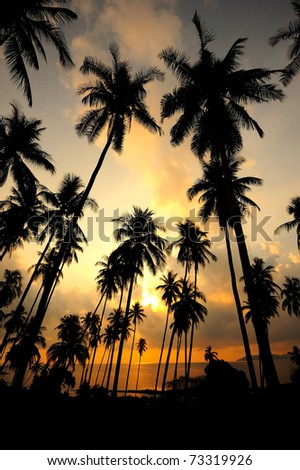 Coconut palms on sand beach in tropic on sunset. Thailand - stock photo