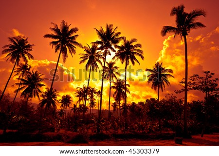 Coconut palms on sand beach in tropic on sunset. Thailand, Koh Chang, Klong Prao beach - stock photo