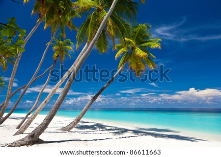 Coconut palms on the beach. Lagoon.