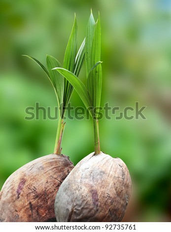 Coconut seedlings, Concept of a new life