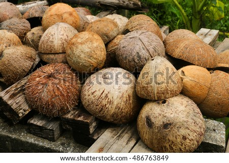 coconut shell dry