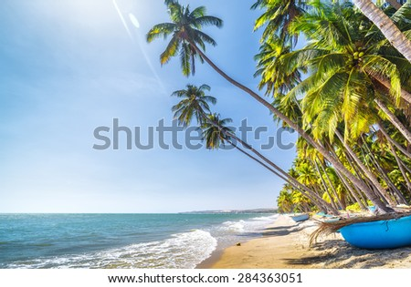 Coconut sunny summer day at the shore of BinhThuan with gentle but feels peaceful, fun for the weekend - stock photo